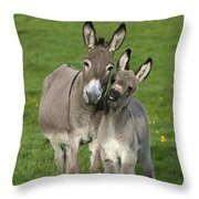 Donkey Mother And Young Throw Pillow