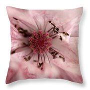 Double Dusty Rose Poppy From The Angel's Choir Mix Throw Pillow