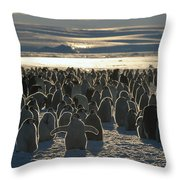 Emperor Penguin Aptenodytes Forsteri Throw Pillow by Pete Oxford