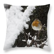 European Robin Erithacus Rubecula Throw Pillow