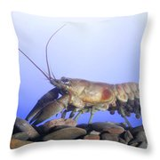 Female Rusty Crayfish Throw Pillow