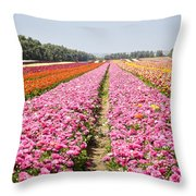 field of cultivated Buttercup  Throw Pillow