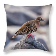 Galapagos Dove In Espanola Island. Throw Pillow