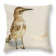Galapagos Hood Mockingbirds Throw Pillow