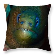 Golden Moray Eel Throw Pillow