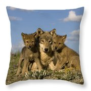 Gray Wolf And Cubs Throw Pillow