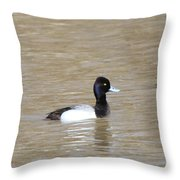 3 Greater Scaup  4060 Throw Pillow