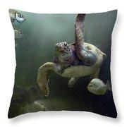 Green Sea Turtle Chelonia Mydas Throw Pillow