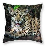 Jaguar Panthera Onca, Pantanal Throw Pillow