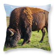 Kansas Buffalo Throw Pillow