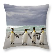 King Penguin Aptenodytes Patagonicus Throw Pillow
