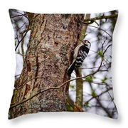 Lesser Spotted Woodpecker Throw Pillow