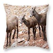 3 Little Lambs Throw Pillow
