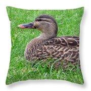 New Zealand - Female Mallard Duck Throw Pillow