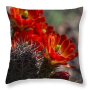Red Hot Hedgehog  Throw Pillow