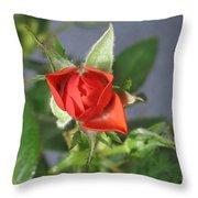 Red Rose Blooming Throw Pillow