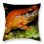 Rosy Ground Frog Throw Pillow