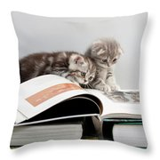 Scottish Fold Cats Throw Pillow by Evgeniy Lankin