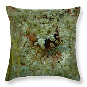 Squat Anemone Shrimp Throw Pillow