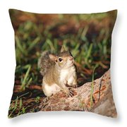 3- Squirrel Throw Pillow