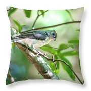 Tufted Titmouse In The Wilds Of South Carolina Throw Pillow