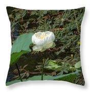 White Lotus Flower Flower Lotus Nature Summer Green Plant Blossom Asian Throw Pillow
