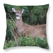 White Tailed Deer Calverton New York Throw Pillow