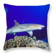 Whitetip Reef Shark Throw Pillow