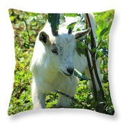 Young Goat On A Farm Throw Pillow