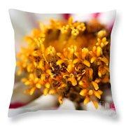 Zinnia Named Zahara Starlight Rose Throw Pillow