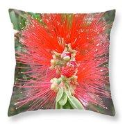 Australia - Red Callistemon Flower Throw Pillow