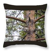 Hawk Owl Throw Pillow