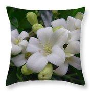 Australia - Gardenia White Flowers Throw Pillow