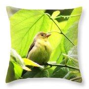 3154 - Tanager Throw Pillow