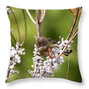 3172 - Warbler Throw Pillow