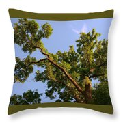 3256 Photography Forest Scene  Throw Pillow