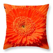 3286 Throw Pillow