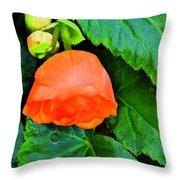 Velvet Nights  Throw Pillow
