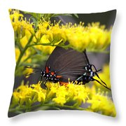 3454 - Butterfly Throw Pillow