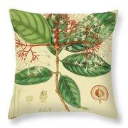 Vintage Botanical Illustration Throw Pillow