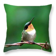 3531 - Ruby-throated Hummingbird Throw Pillow