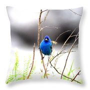 3553-015 - Indigo Bunting Throw Pillow