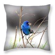 3554-027 -indigo Bunting Throw Pillow