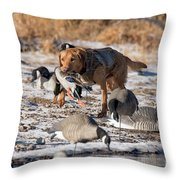 Duck And Goose Hunting Stock Photo Image Throw Pillow
