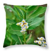 37453 Throw Pillow
