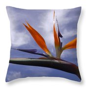 Australia - Bird Of Paradise On Blue Throw Pillow