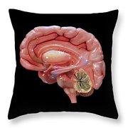 3d Rendering Of Human Brain Throw Pillow