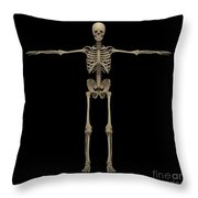 3d Rendering Of Human Skeletal System Throw Pillow