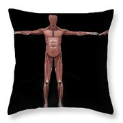 3d Rendering Of Male Muscular System Throw Pillow