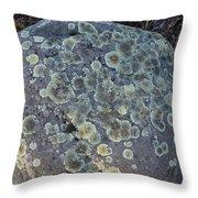 3da5793-dc Lichen On Rock Throw Pillow